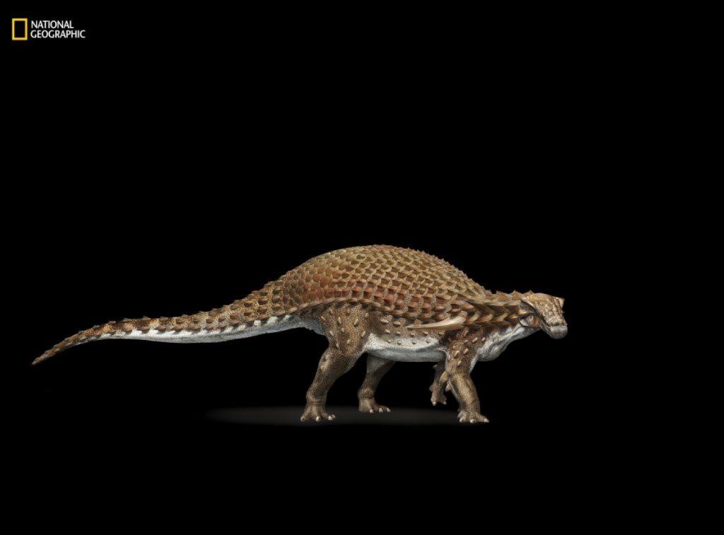 Un dinosaure presque intact Imrs.php_-1024x757