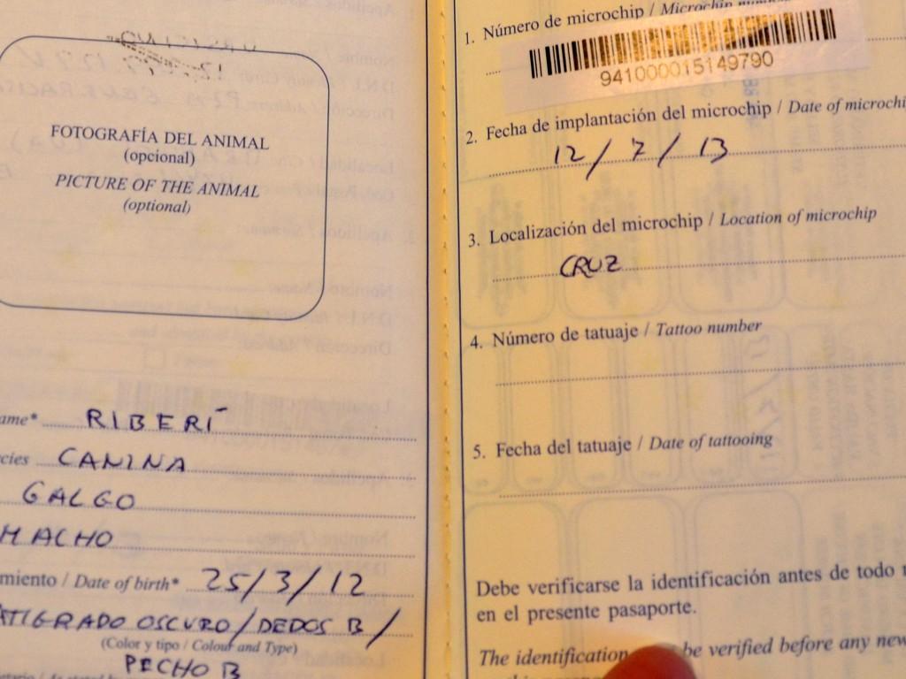 Riberi galgos barbudos  à l'adoption Scooby France  Adopté DSC_0014_1