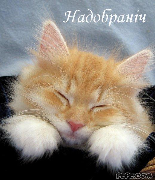 Попкорн (общество, политика) - Том XVII - Страница 3 Nadobranich_0
