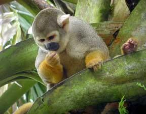 Un animal - Blucat - 4 Novembre trouvé par Martine P_sq_monkey