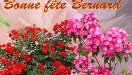 BON MARDI A TOUS...... Bernard-24622298