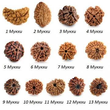 Плоды магического дерева рудракша 3EAoz