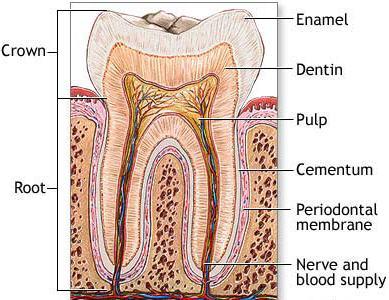 عکسهای دندان Tooth