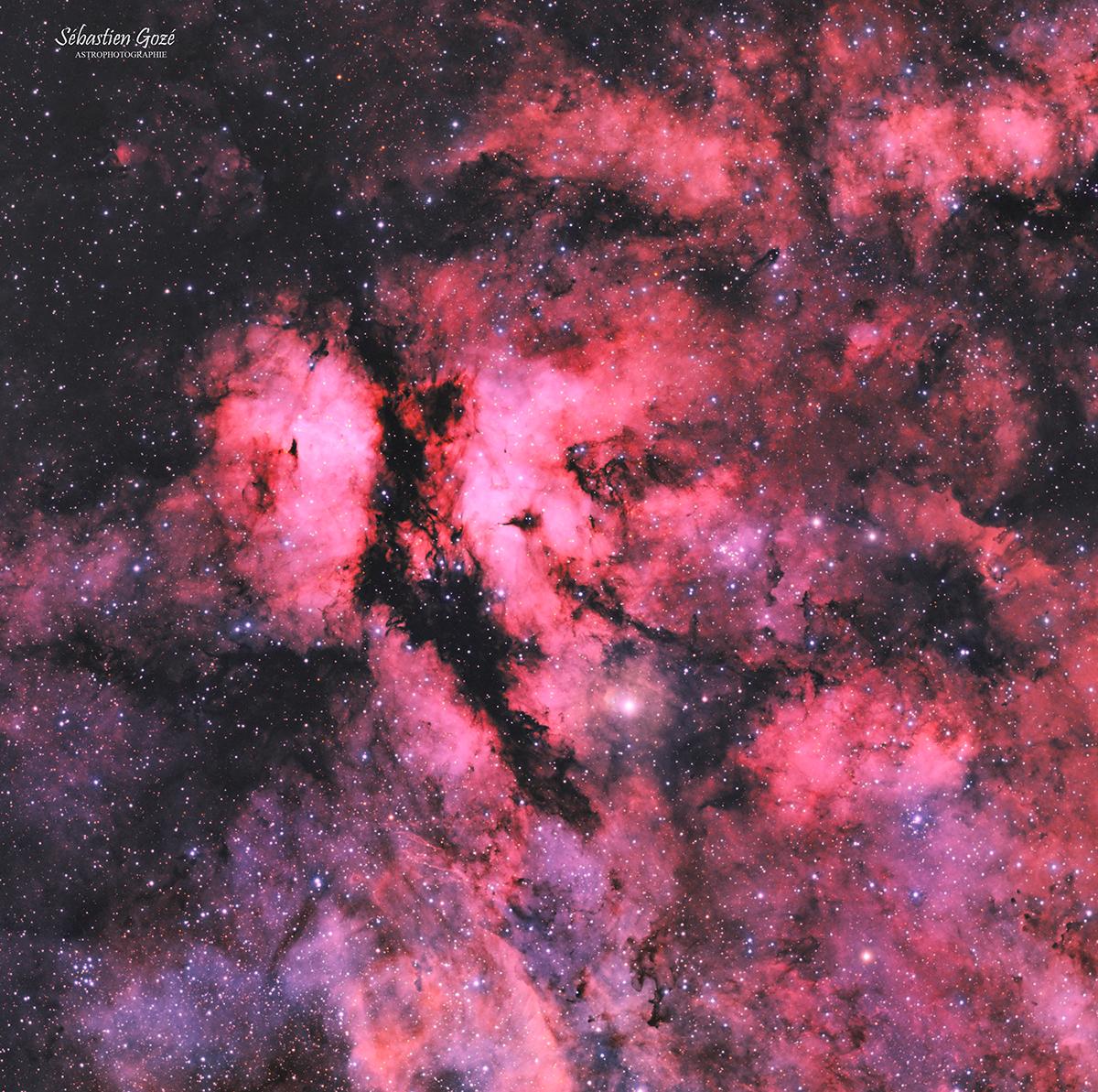 IC 1318 - Le papillon de l'hémisphère nord  en HaOO Butterfly_HaOO_forum