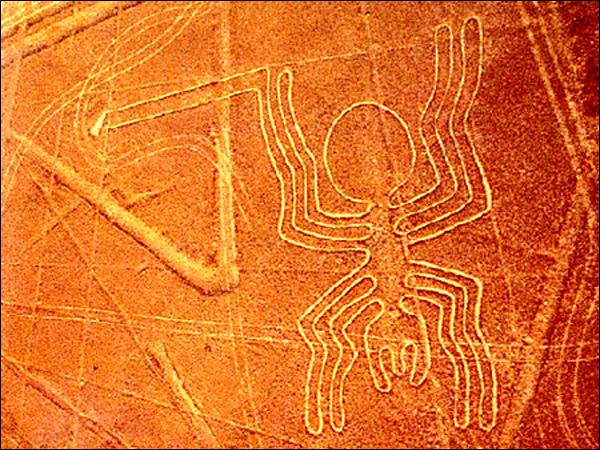 Les lignes nazca  Naz_spider