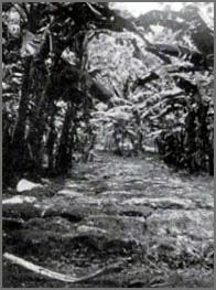 Ruines dans le pacifique Rarotonga