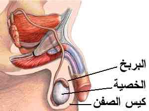 الامراض المعدية Gtm2