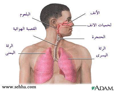 أمراض الجهاز التنفسي Respiratory tract Rt