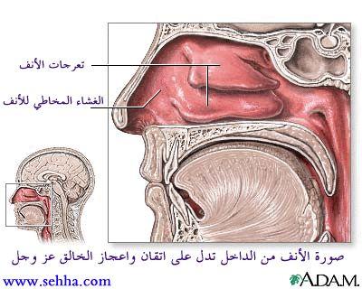أمراض الجهاز التنفسي Respiratory tract Urt