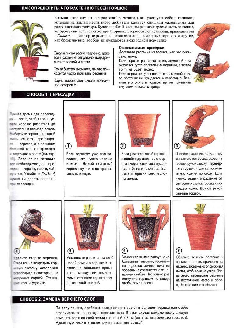 Основные этапы пересадки домашних растений. Peresadka-rassady-cvetov-v-gorshok