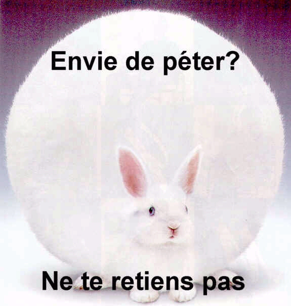 Images humoristiques.... - Page 2 Lapin