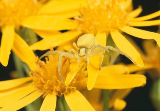 شاهدوا العجب فى التمويه أو التخفي عند الحيوانات و الحشرات 5gtg