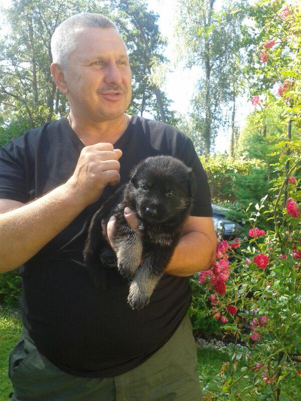 Щенки 24.06.2014, АЛЫЙ х ALVA Veo-Inro ( Латвия) SB4t6