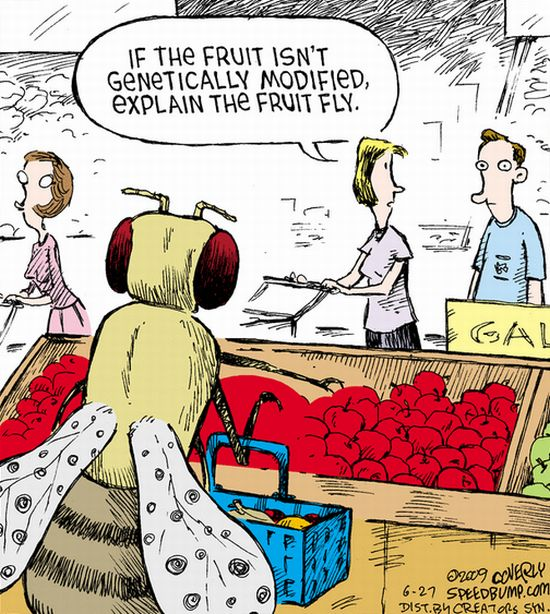 Ethan A. Huff ~ Americans Eat More Than Their Body Weight In GMOs Every Year, Study  Cartoon_gmo_fruitfly