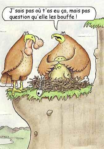 Images humoristiques.... GAigles