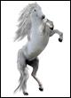 Popis trgovin in predmetov Vilinski-konj