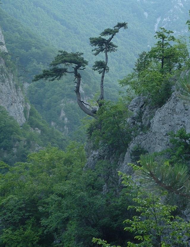 CF foto natječaj rujan 2014 – slobodan motiv – prijave od 3.09. - 10. 09.2014. Na-kisi-i-vjetru