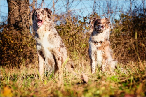 Kjara Kocbek Animal Photography - Page 4 108565301020197760108144