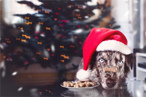 Kjara Kocbek Animal Photography - Page 4 Christmas2014-fb