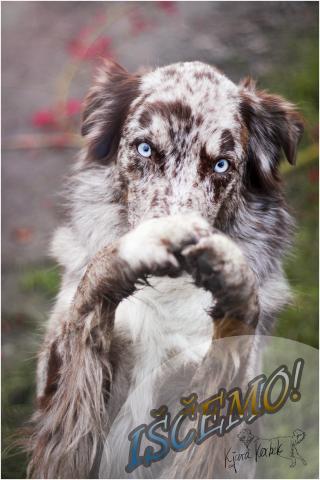 Kjara Kocbek Animal Photography - Page 3 Img0366-edit-fb