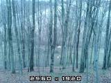 Izrada ogrijevnog drva - Page 22 Fotografija-0064