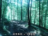 Šumski putevi Fotografija-0002