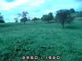 Uljna-bundeva-buča-tikva Fotografija-0006