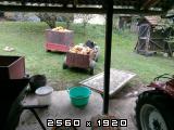 Uljna-bundeva-buča-tikva - Page 2 Img20170920145748