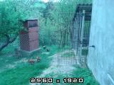 Domaće kokoši i domaća jaja Fotografija-0008