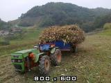 Traktori  Pasquali opća tema - Page 2 Pascuali-970