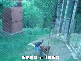 Domaće kokoši i domaća jaja Fotografija-0009