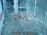 Domaće kokoši i domaća jaja - Page 2 Fotografija-0006