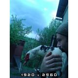 Guske i patke Fotografija-0001-2