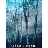 Izrada ogrijevnog drva - Page 13 Fotografija-0013