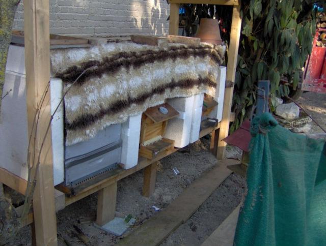 abeilles dehors 02le7l