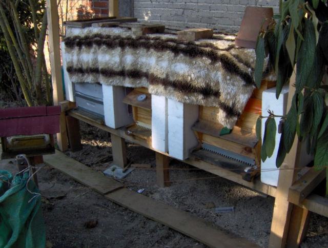 abeilles dehors 02nrqw