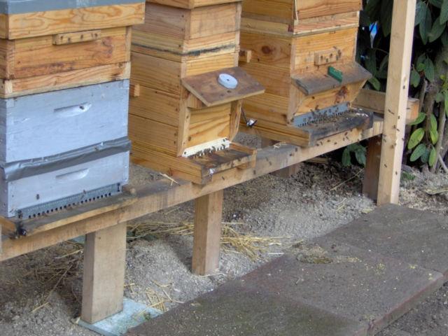 une abeille ne fait pas le printemps. 16dfgp