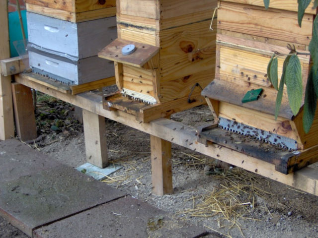 une abeille ne fait pas le printemps. 16wa51