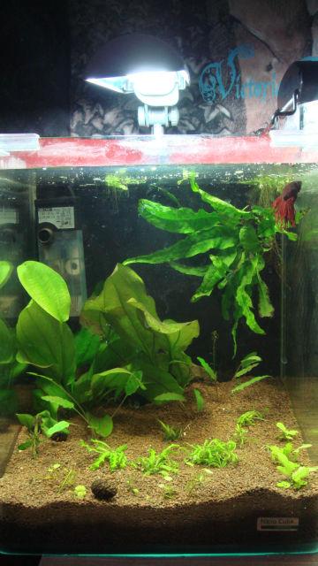 Les bacs de Bloddyfish, 96L, 50L, 40L, 20L, 20L, 0.5Litres 1386z7