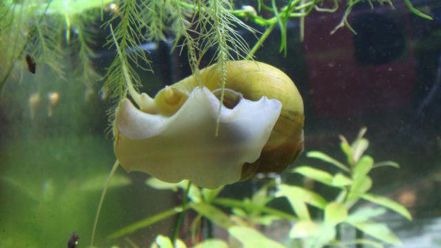 Les bacs de Bloddyfish, 96L, 50L, 40L, 20L, 20L, 0.5Litres 13rg4g