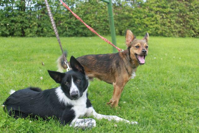 Conflit entre deux chiennes: leur apprendre à s'ignorer? 16jcfp