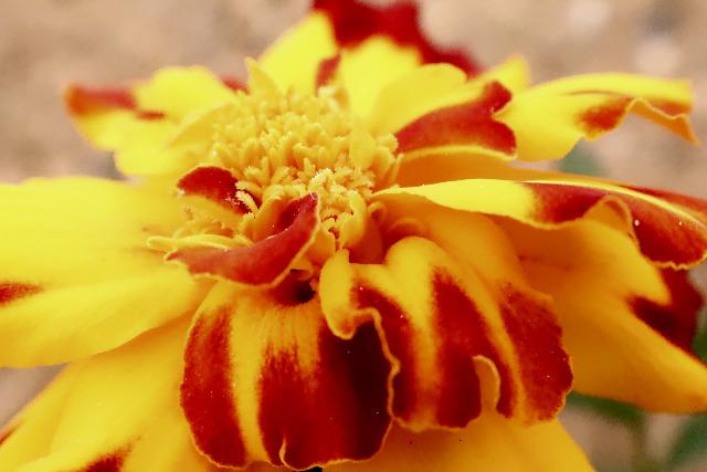 Mes photos ... Nature Macro H4zr33