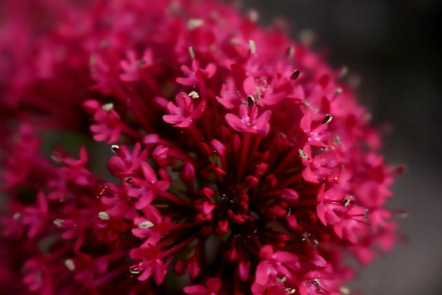 Mes photos ... Nature Macro Lsthy8