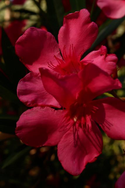 Mes photos ... Nature Macro 8e3dd2
