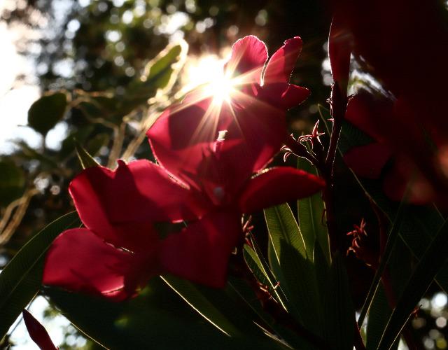 Mes photos ... Nature Macro Okyosu