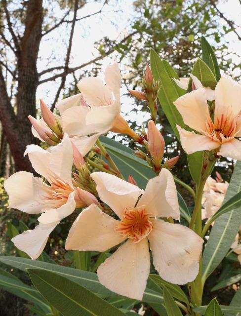 Mes photos ... Nature Macro Wfawo9