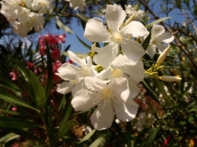 Mes photos ... Nature Macro X9woqj