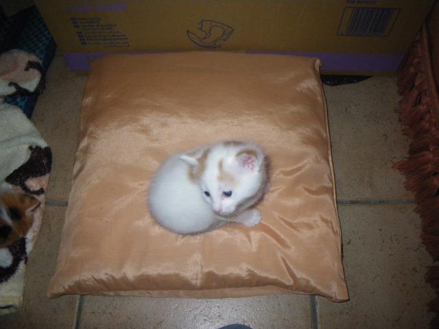 Un petit chaton 07y7fb