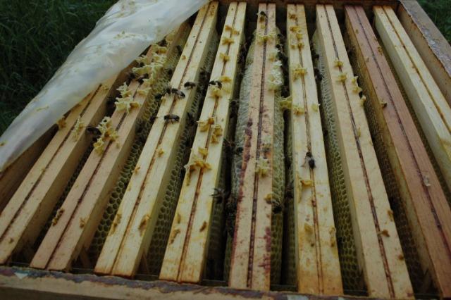 Faire un chasse abeilles avec un nourrisseur Nicot en 10mn- test  31ow2e