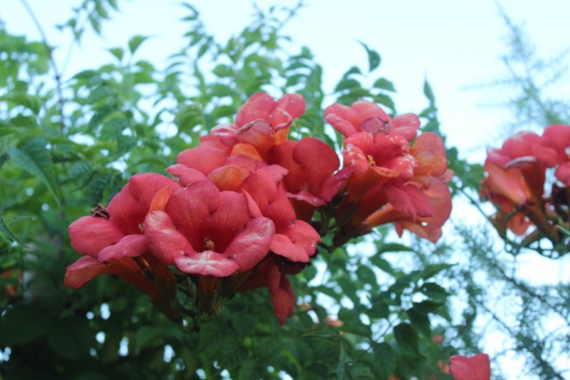 Mon p'tit jardin 080h5o